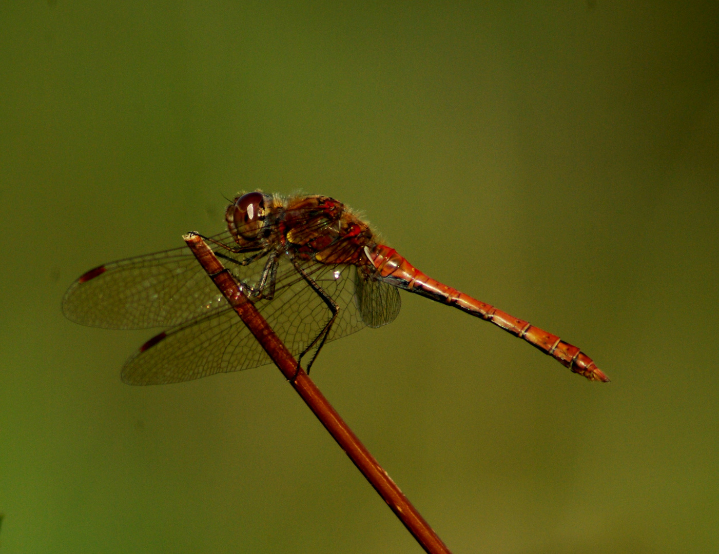 A dragonfly !