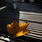 A fallen autumn leaf rests on my terrace