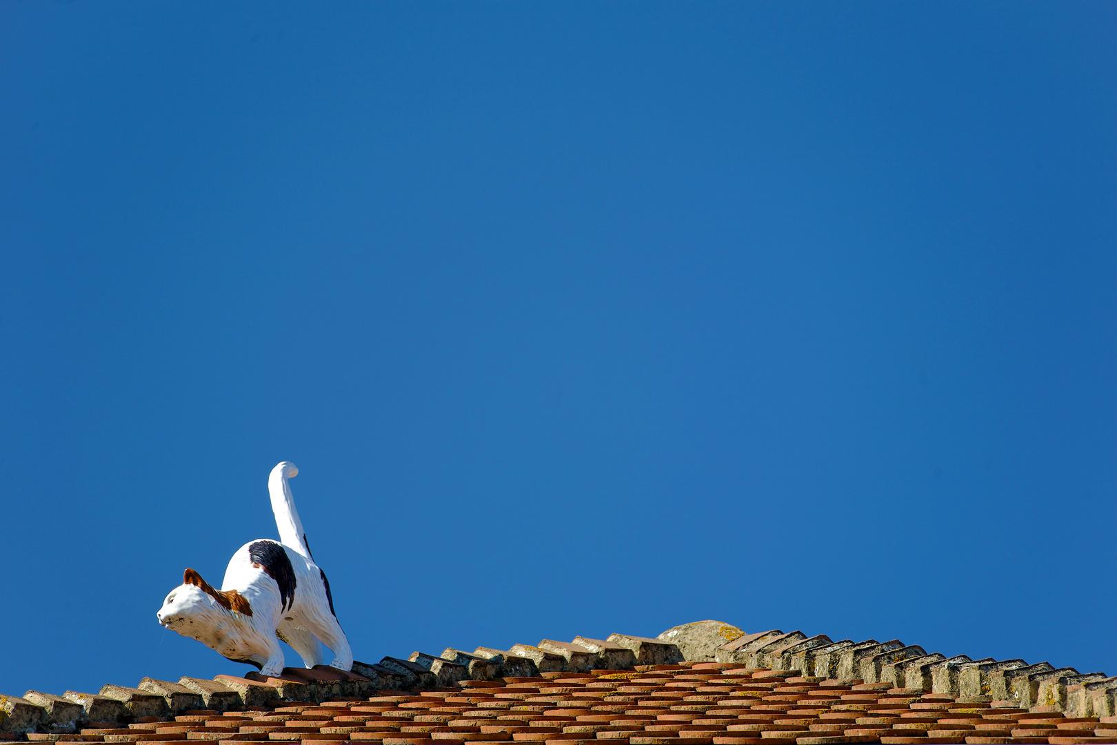 a false cat on the roof