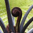 A Fantastic Fern In New Zealand 2007