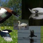 A few birds, May -2010