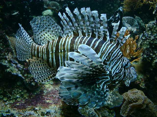 A fish..
