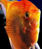 A fish, I call her Wanda