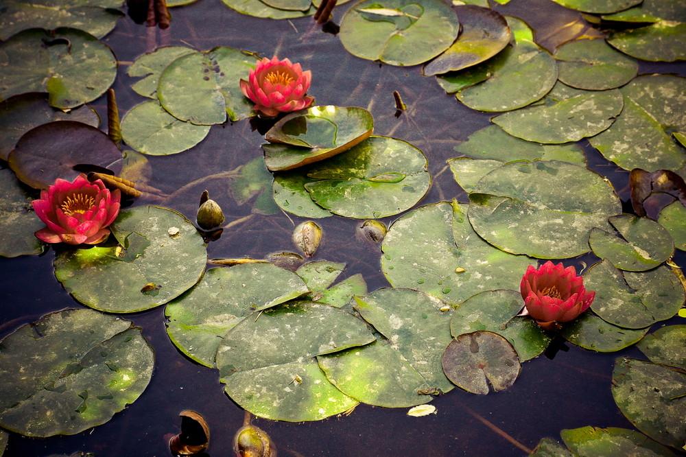 A fleur d'eau.