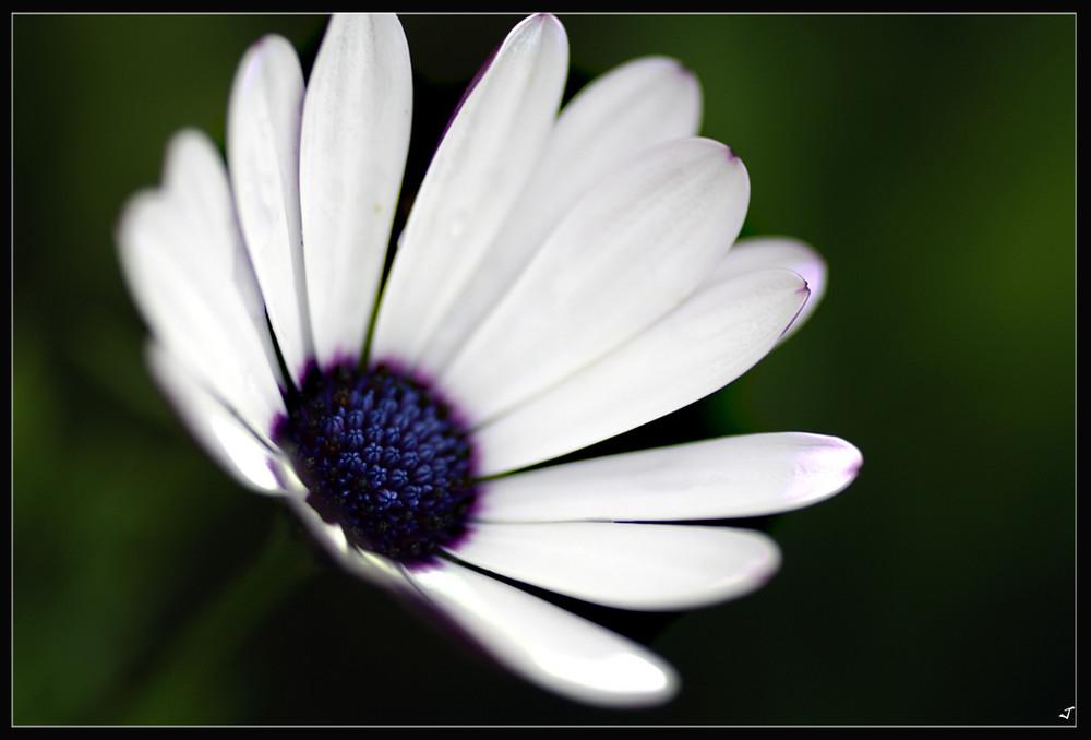 A floret