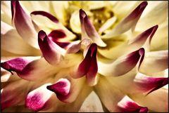 a flower? (2)