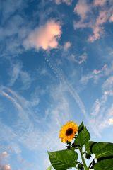 a flower in the sky - oder im himmel?