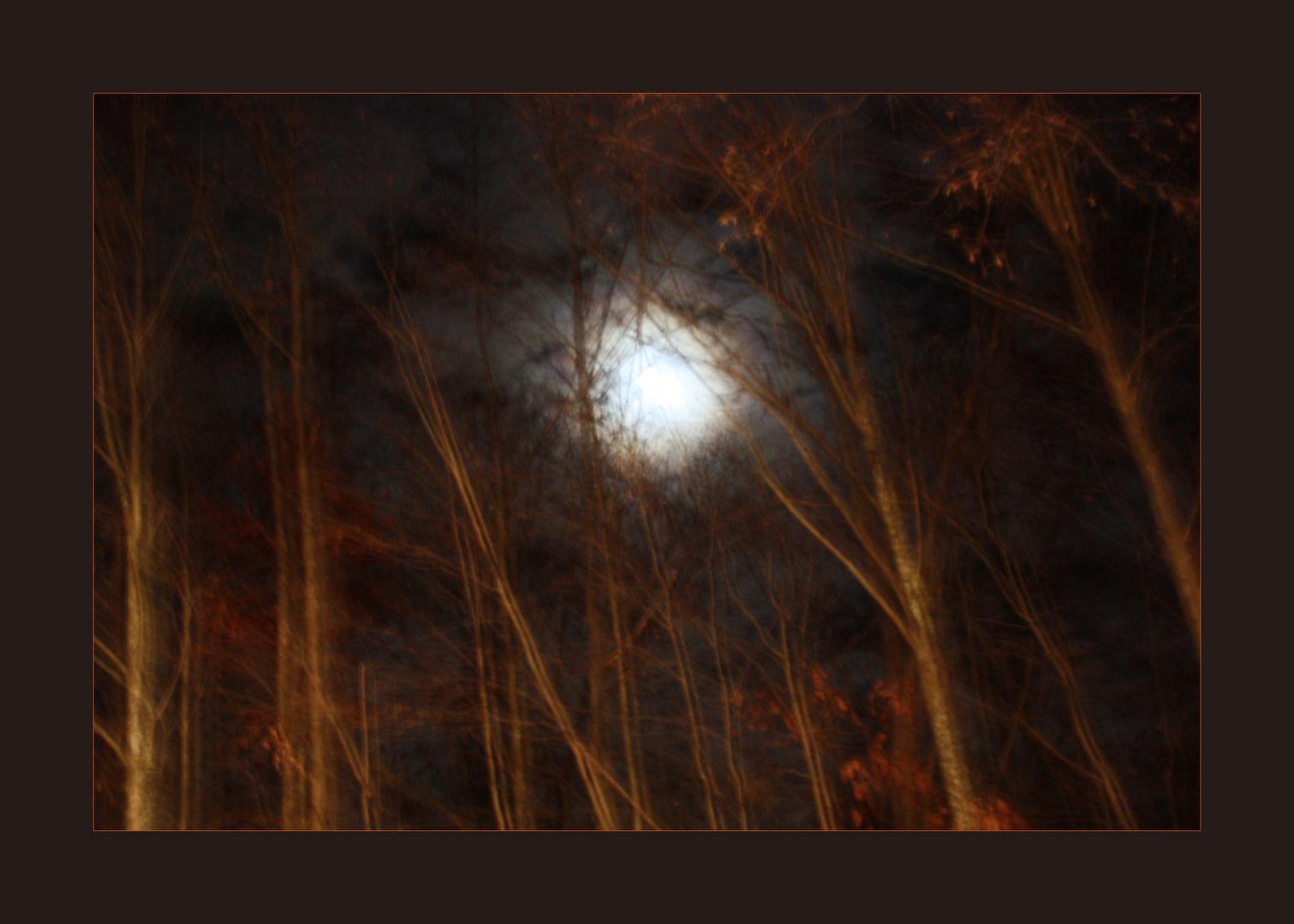 A Foggy Moonlit Night