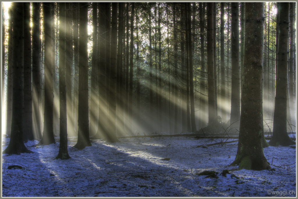 a forest with a fog and sun