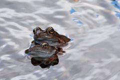 A frogs heaven