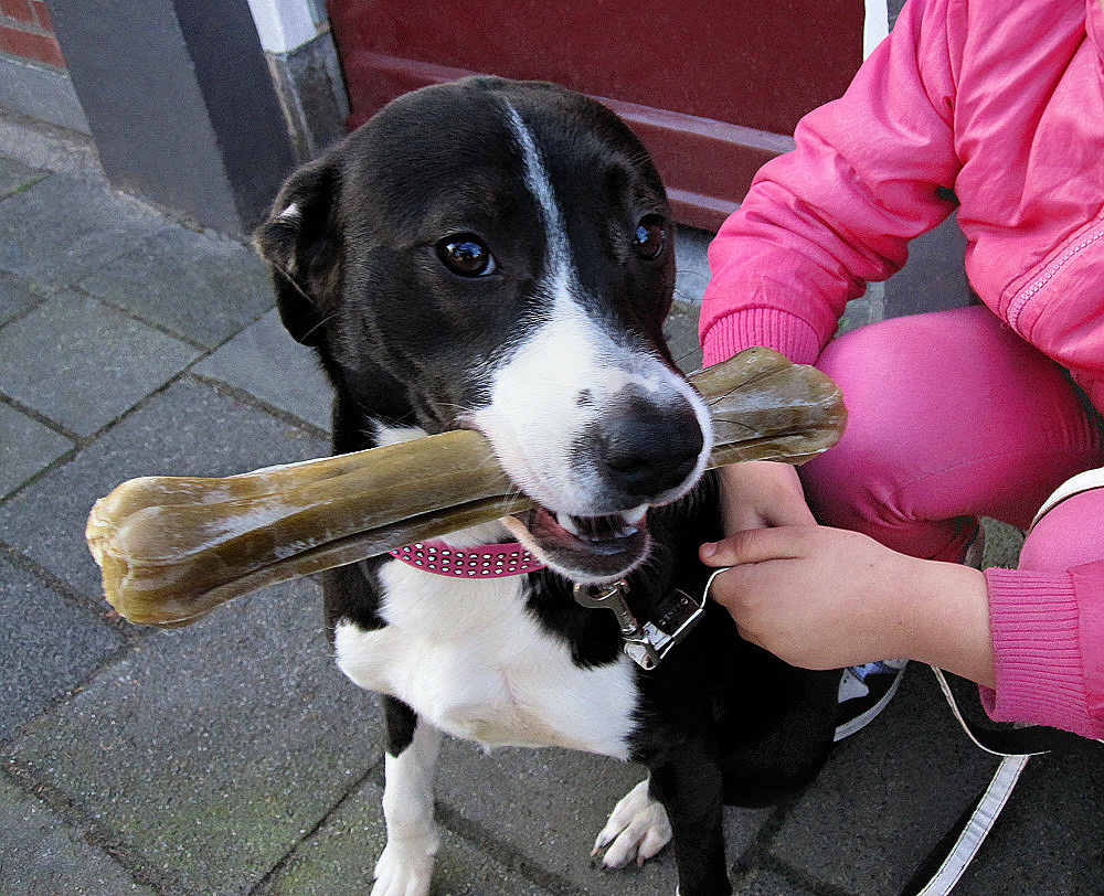 A happy dog with a bone in his mouth