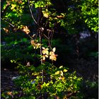A Hint of Early Autumn - No.2