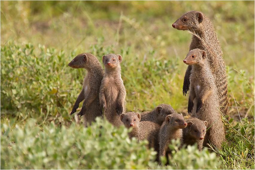 A hole Family
