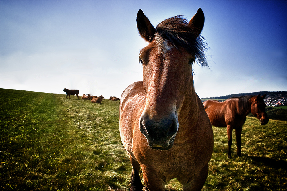 A horse is a horse, of course^^