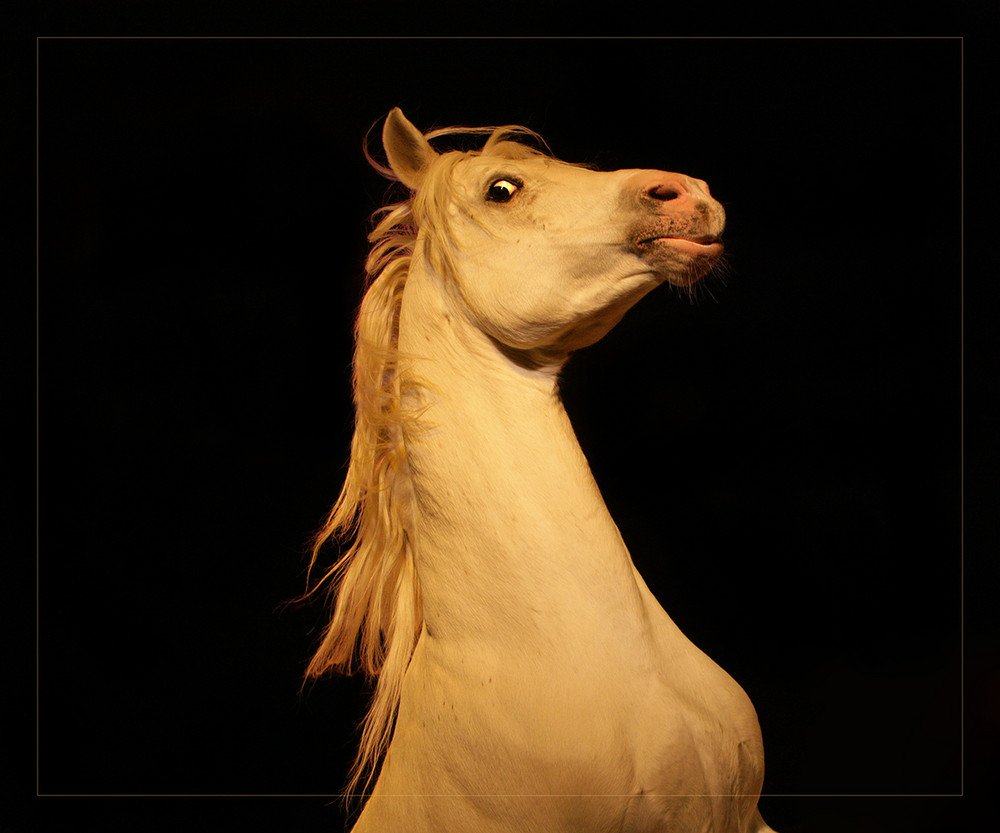 A horse with no name...