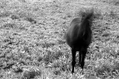 a horse with no name  (SW)
