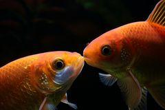 A kiss is a kiss