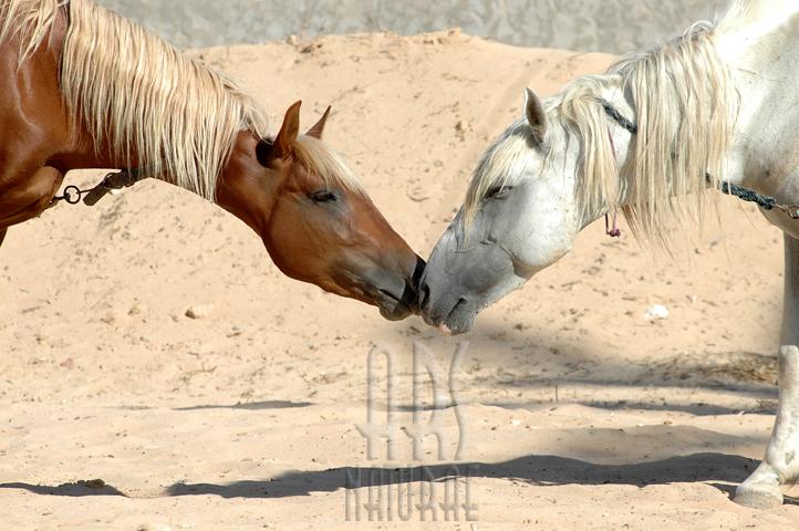 A Kiss (Tunis 2008.)