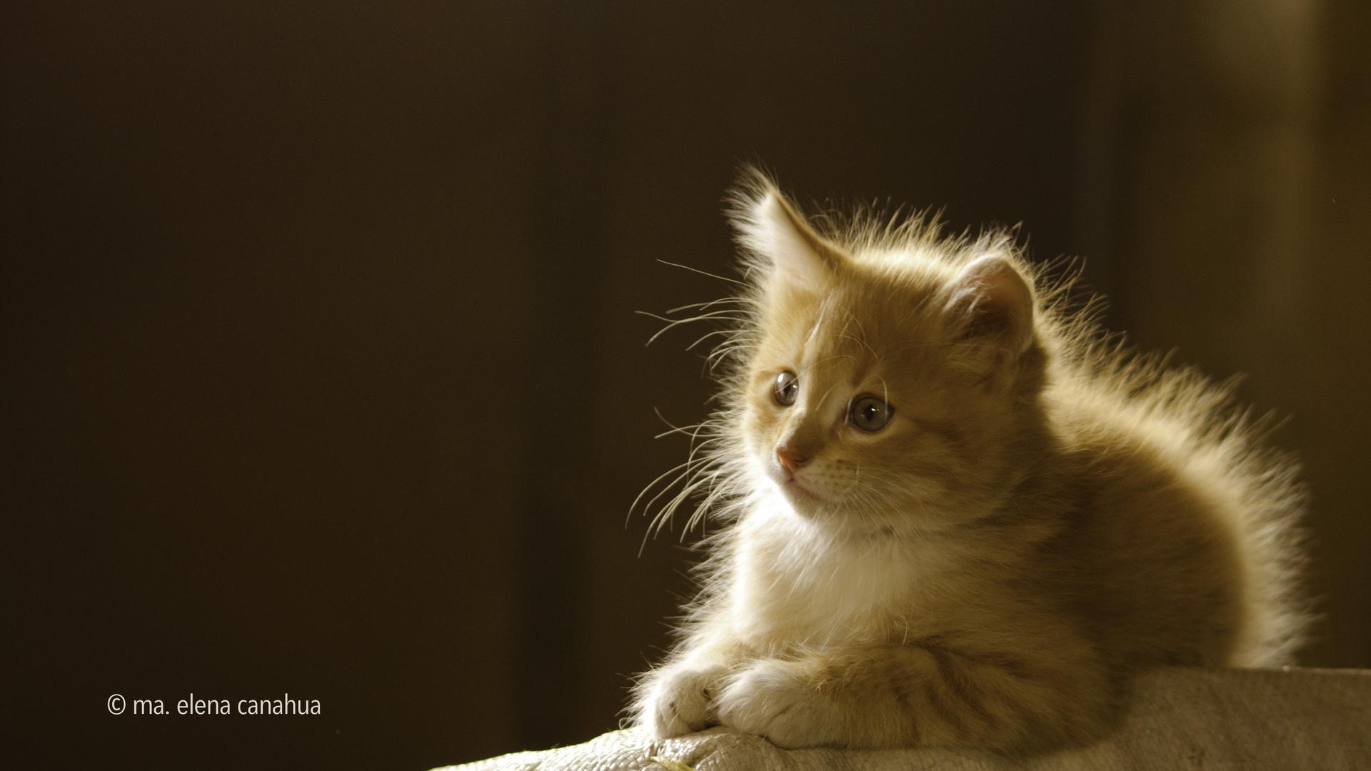 a kitty's portrait