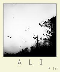 A L I # 1 9
