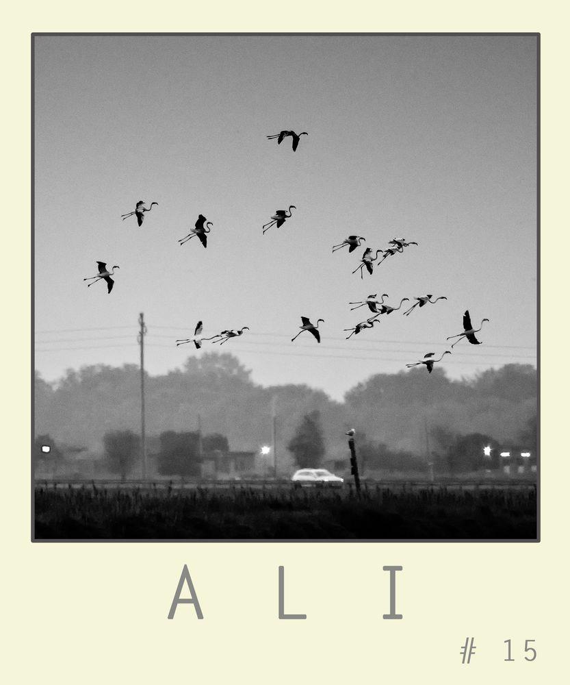 A L I # 15