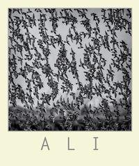 A L I  # 34