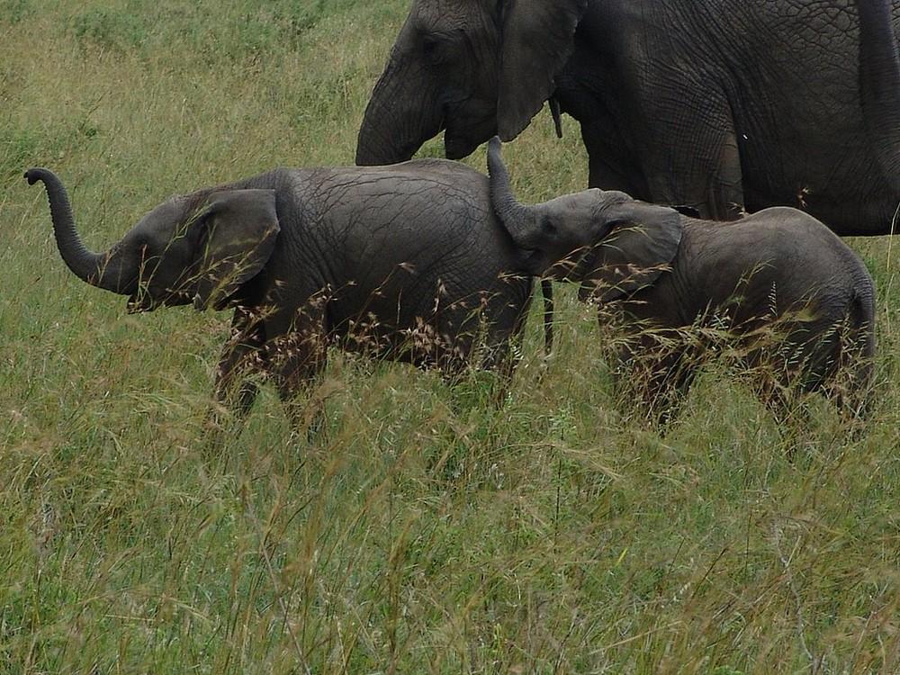 A la queue leuleu au Kenya