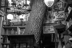A la tienda de antiguedades le crecio un árbol