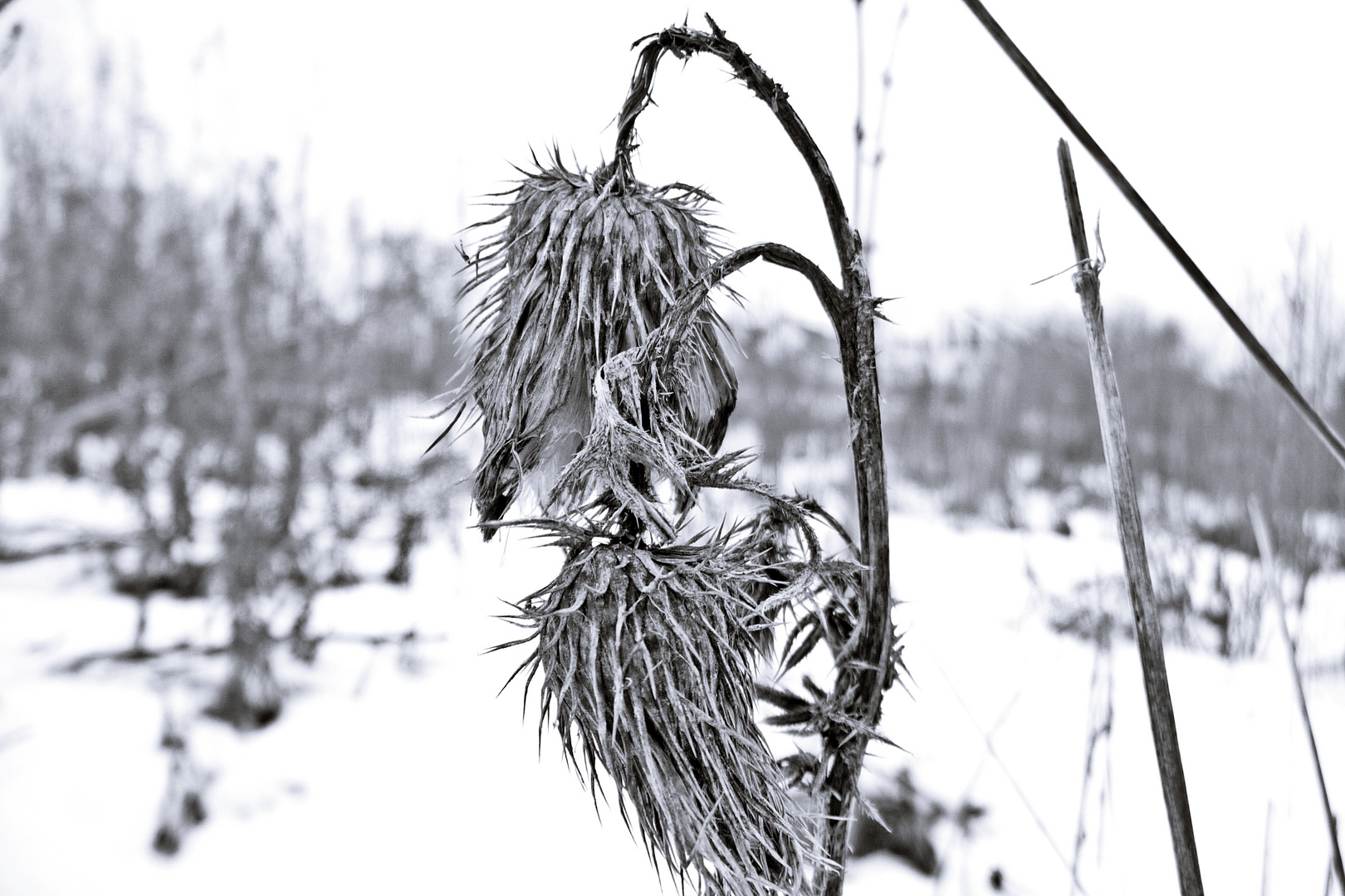 a last winter impression