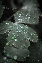 ~* a little bit of fall *~