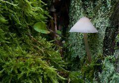 A little lamp