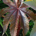 A Little Leafy