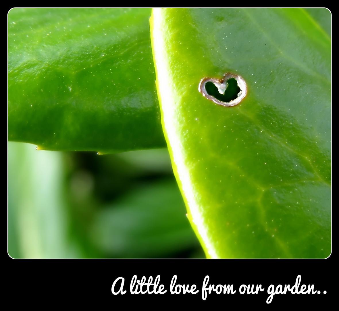 A little love from our garden..
