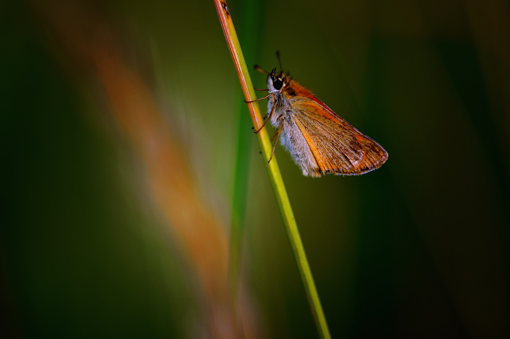 A Little Skipper