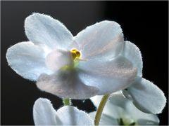 A little white beauty