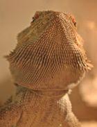 """A lizard named """"Lucky"""" - 2"""