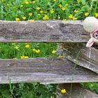 A Lost Little Lamb