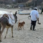 A Man, his Donkey and his Dog