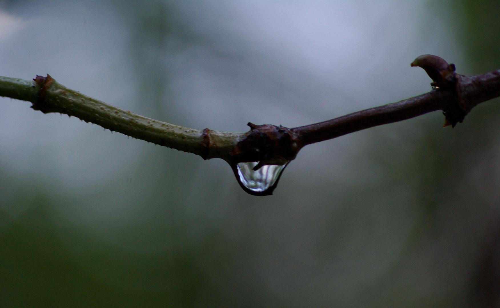 A Morning Drop!