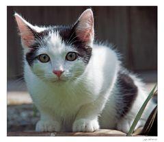 A new kitten in town...