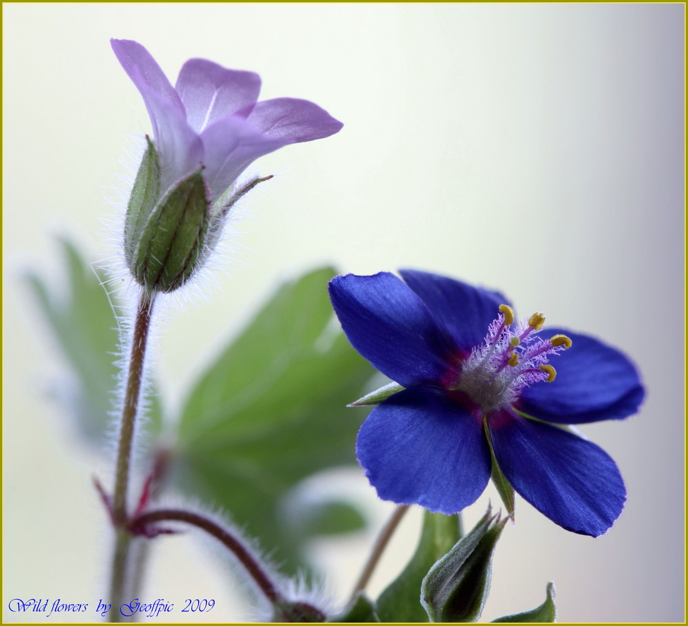 A pair of wild flowers