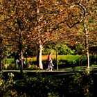 A Park Stroll in Autumn