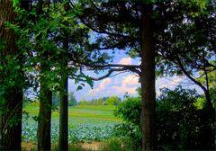 a pasture