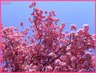 - a pink dream -