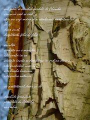 a poem by Anni Lorei Mainka
