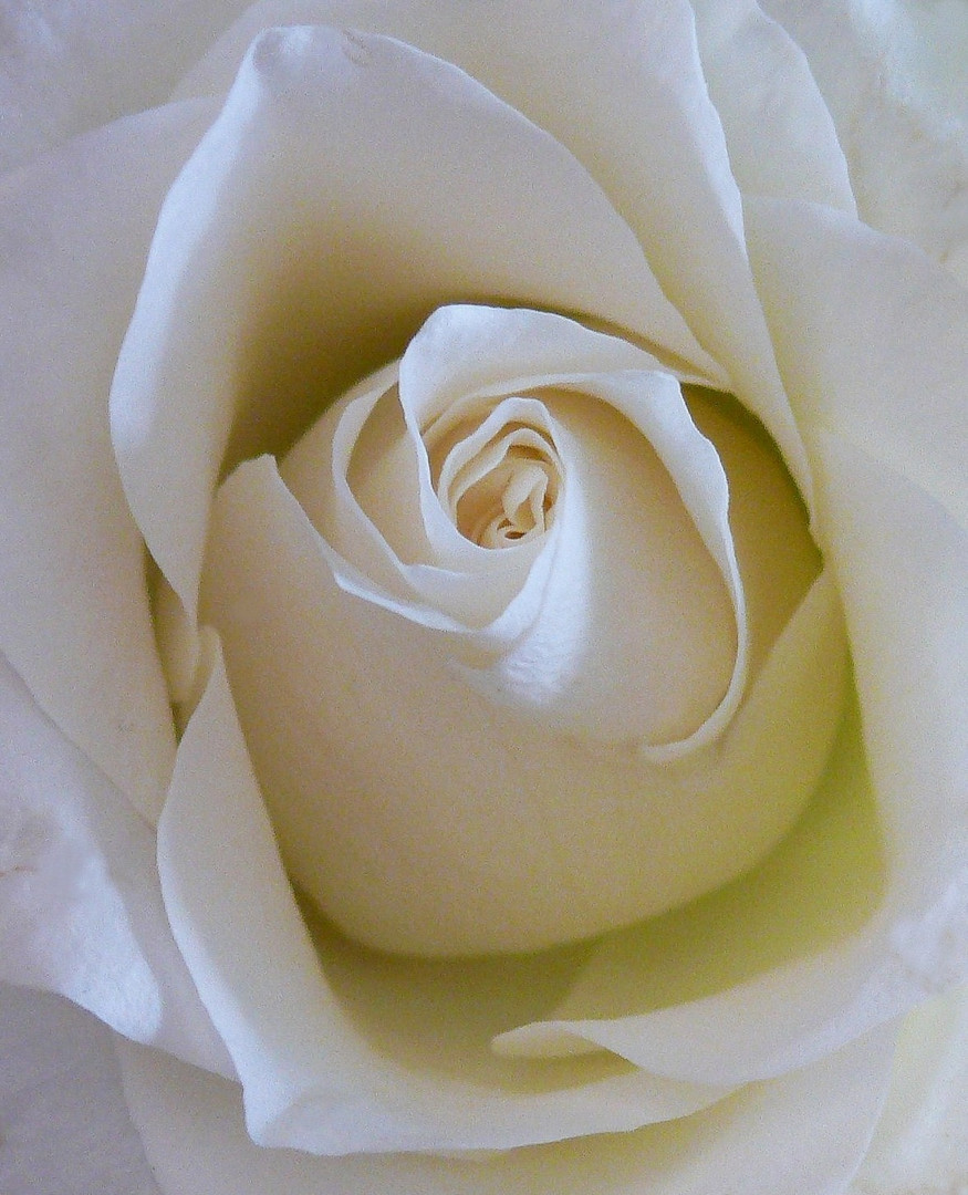 """""""A Rose for Judy"""""""