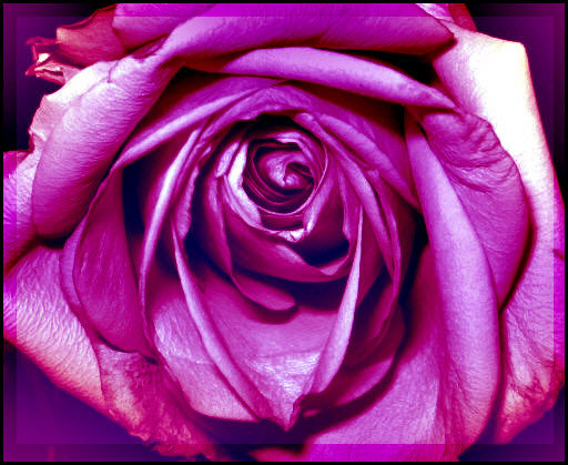 ... a rose, is a rose, is a rose ...