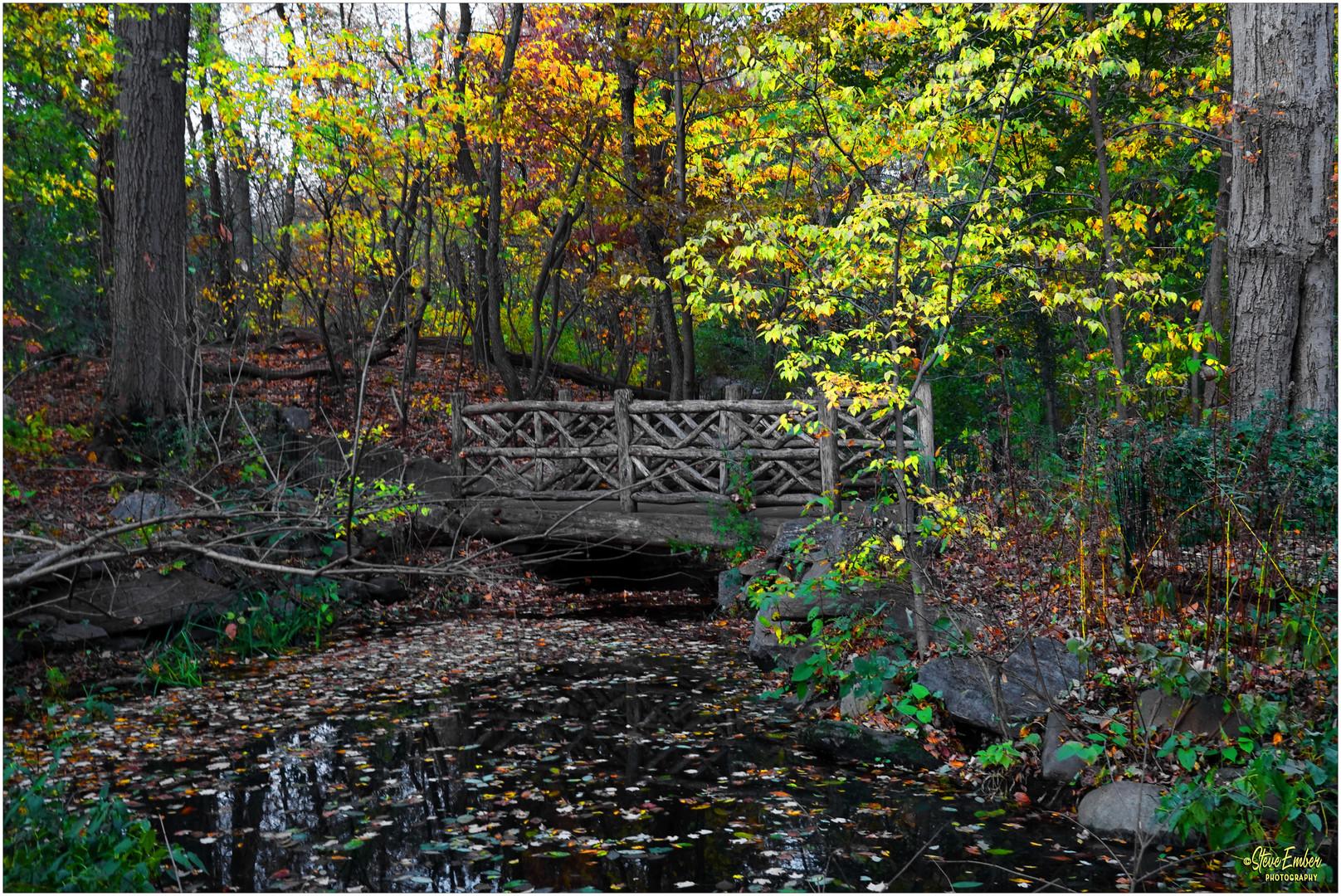A Rustic Bridge in The Ramble - A Central Park Autumn  Impression