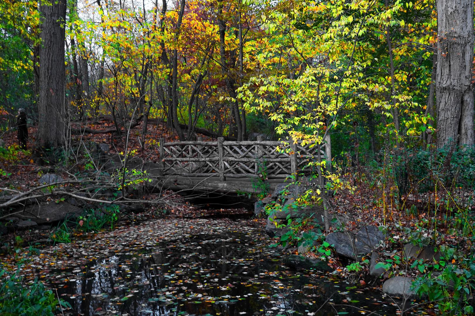 A Rustic Bridge in the Ramble - A Central Park Impression