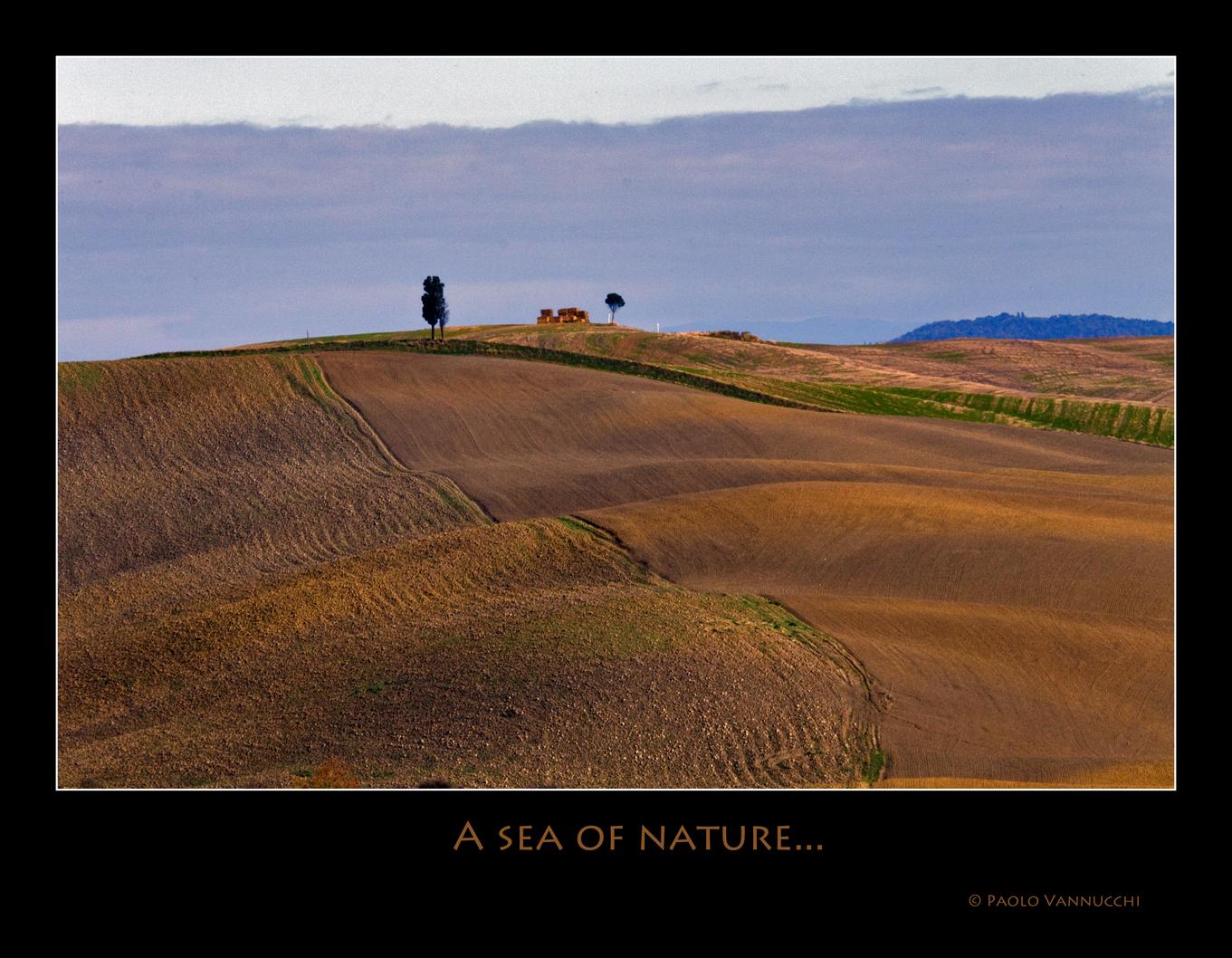 A sea of nature.....Terre senesi...